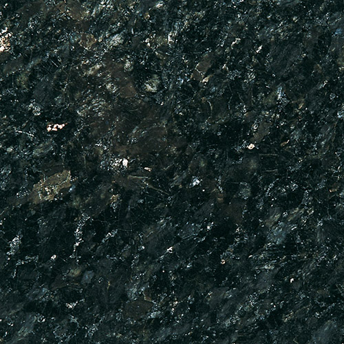 Noir-Labrador